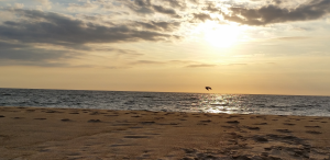 tai chi beach at sunrise